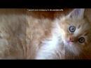 «Котята» под музыку мишель тело))* - носом носом по какосам))). Picrolla