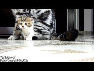 Милое видео-нарезка про котят
